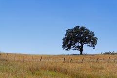 Enkelt ensamt träd i ett brunt gräsfält Royaltyfri Bild