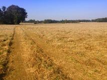 Enkelt fält efter skörden, Polen Fotografering för Bildbyråer