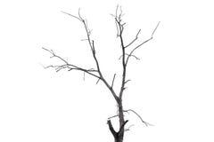 Enkelt gammalt och dött träd som isoleras på vit bakgrund Fotografering för Bildbyråer