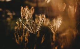 Enkelt gräs Royaltyfri Foto