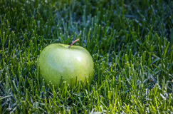 Enkelt gräsplan Royaltyfri Fotografi