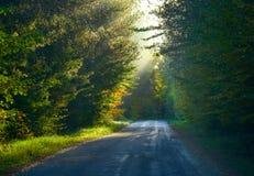 Enkelt punktperspektiv ner en smal skogsmarkväg Den dimmiga träd-överkanten skogsmarken i ljust solljus, skuggigt träd & skog-fod Arkivbild