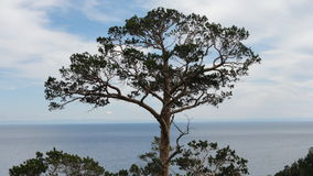 Enkelt sörja-träd ovanför vattnet Arkivfoton