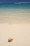 enkelt strandskal royaltyfria bilder