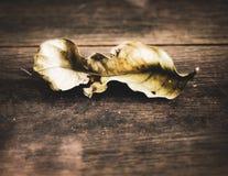 Enkelt torkat blad på trägolv ingenting sista för evigtbegreppsidé av ändringsfilosofibakgrund arkivfoton