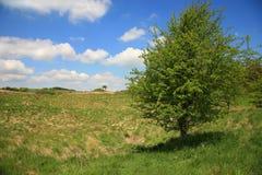 Enkelt träd Arkivfoton