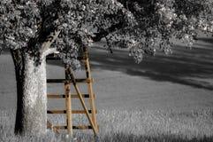 Enkelt träd 001-130509 Arkivbilder