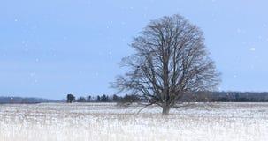 enkelt träd för 4K UltraHD i ett snöig landskap stock video