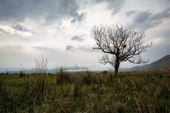 Enkelt träd framme av Loch Lomond Royaltyfria Bilder