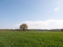 Enkelt träd i avståndet av ett brett öppet gräsfält under th Arkivfoton