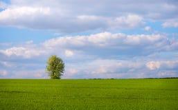 Enkelt träd i våräng Arkivbilder