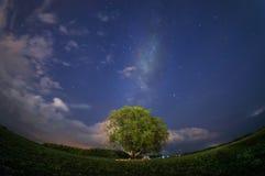 Enkelt träd med den mjölkaktiga vägen Royaltyfria Foton