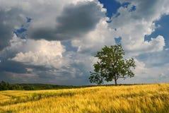 Enkelt träd med moln royaltyfria foton