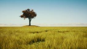 Enkelt träd och gräs i höst stock video