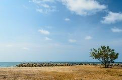 Enkelt träd och stranden Royaltyfria Bilder