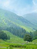 Enkelt träd på bergbakgrund Arkivfoto