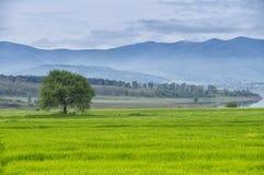 Enkelt träd på en äng för grönt gräs med berget, sjön, blå himmel och moln fotografering för bildbyråer