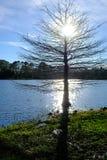 Enkelt träd på en kust av sjön Arkivbild