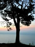 Enkelt träd på soluppgång Arkivbilder