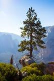 Enkelt träd som är högt i det Yosemite landskapet Kalifornien USA arkivfoto