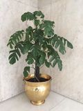 Enkelt träd som lokaliseras i hörnet royaltyfri foto
