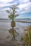 Enkelt träd som står fortfarande royaltyfria foton