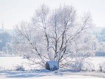 Enkelt träd som täckas i frost och snö III arkivfoton