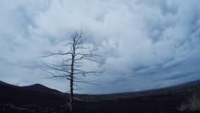 Enkelt träd som växer den Tid schackningsperioden med vindanimering Ett ensamt träd, moln flyga iväg trä för song för grouseföräl arkivfilmer