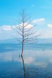 Enkelt träd som växer i myrsjön på den dimmiga morgonen Royaltyfri Foto