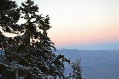 Enkelt träd till det vänstert Fotografering för Bildbyråer