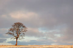Enkelt träd under stor himmel Royaltyfria Bilder