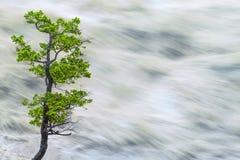 Enkelt träd vid suddigt flodvatten för rörelse Royaltyfri Fotografi