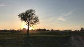 Enkelt trädlandskap över solnedgång stock video