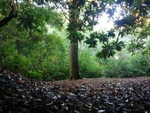 Enkelt träd i solljuset Fotografering för Bildbyråer