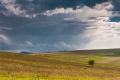 Enkelt ungt träd på det jordbruks- fältet, dramatiska stormmoln Royaltyfri Fotografi