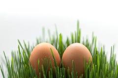 Enkla ägg i det nya gräset på den vita bakgrunden kopiera avstånd Fotografering för Bildbyråer