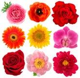 Enkla blommahuvud Steg orkidén, pionen, solrosen, gerber Fotografering för Bildbyråer