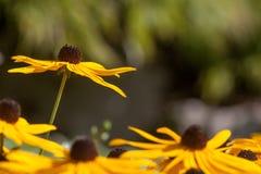 Enkla blommaställningar ovanför vila Royaltyfri Foto