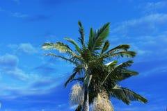 Enkla cocos gömma i handflatan bakgrunden Arkivfoto