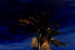 Enkla cocos gömma i handflatan på nattbakgrunden arkivfoton