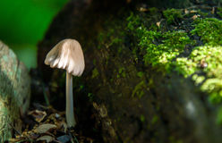 Enkla Forest Mushroom och grön mossa arkivbilder