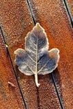 Enkla Frosty Leaf på den röda trätabellen royaltyfria bilder