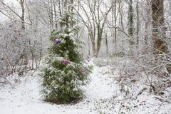 Enkla garneringar på träd i natur på jul Royaltyfri Foto