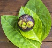 Enkla Mangostin och nytt grönt blad Arkivbild