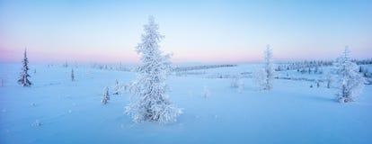 Enkla nya år granträd i snövinterskogen i blått tonar panorama Royaltyfria Bilder