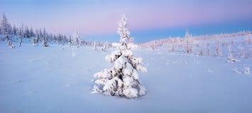 Enkla nya år granträd i snövinterskogen i blått tonar panorama Royaltyfri Fotografi