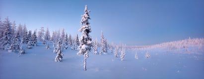 Enkla nya år granträd i snövinterskogen i blått tonar panorama Fotografering för Bildbyråer