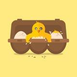 Enkla nyfödda Chick Hit The Egg royaltyfri illustrationer