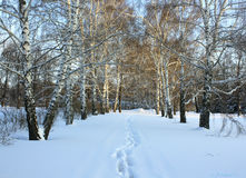 Enkla snöig däckspår - stående Arkivbilder