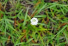 Enkla spirala stjälk med den slågna in överkanten Veiw för vita blommor arkivfoto